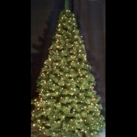 10' Oregon Cascade Fir