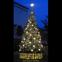 Custom 34' Oregon Cascade Fir<br />Tree
