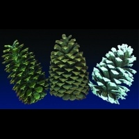 4 in Pinecones
