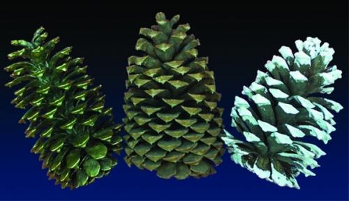 4 in Pinecones