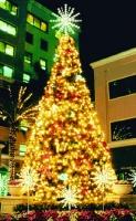 30' Tree